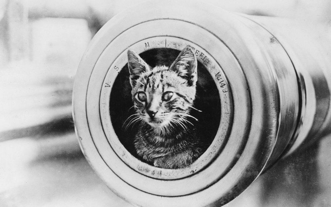 Sobre guerras y gatos